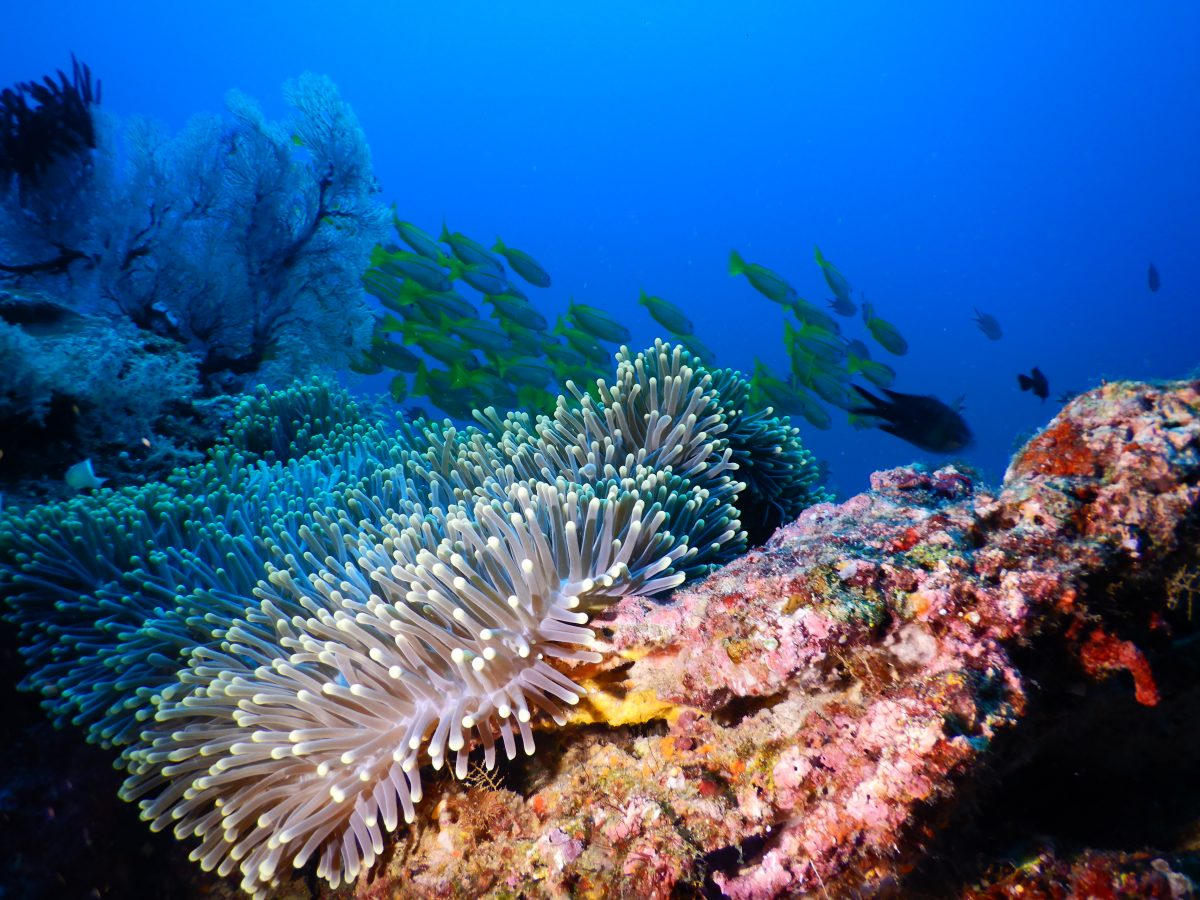 Kudanil Explorer Indonesia Luxury Yacht Diving in Raja Ampat